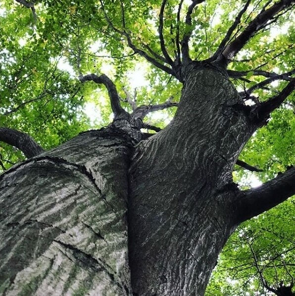 Fa lombja - szerteágazó lehetőségek