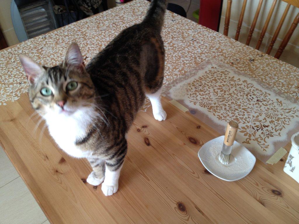 Ez a cica is benti macska - és szeret lakásban élni