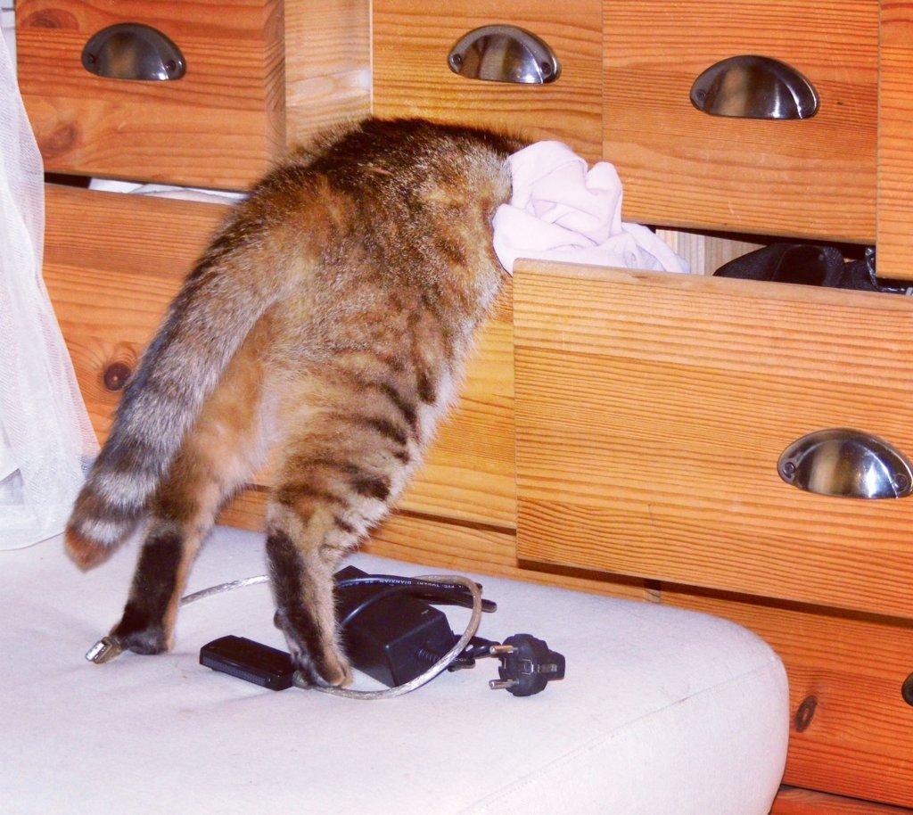 Maci - a benti macskák imádnak a fiókban keresgélni