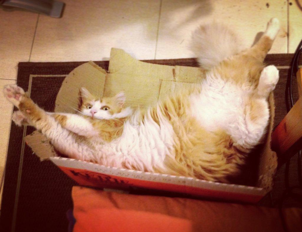 A macskák imádják a dobozokat