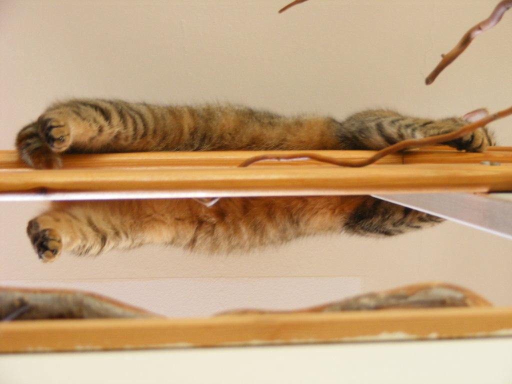 Macska a magasban - egy keskeny korláton pihen